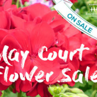 May Court Flower Sale thumbnail